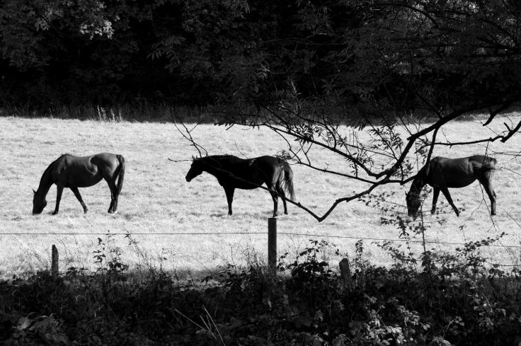 horses_small