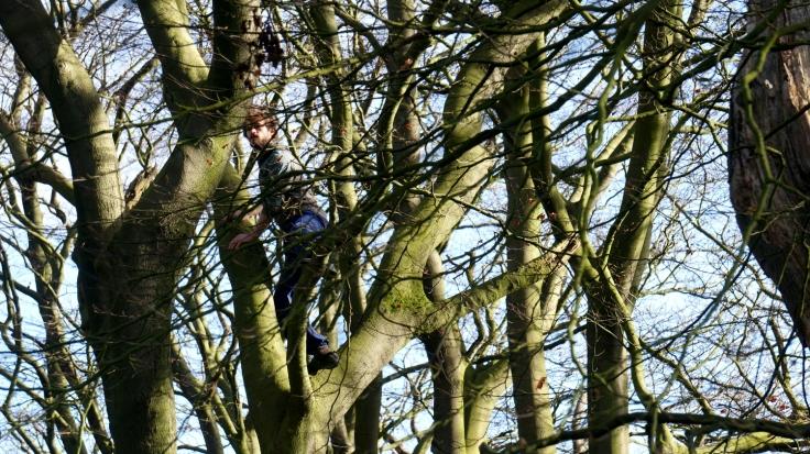 treeman_small